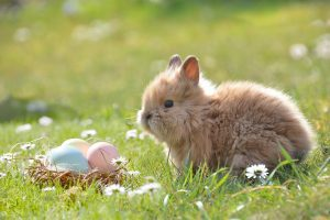 Easter bunny Oakley Green Conservatories